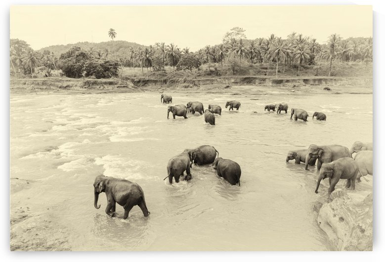 RIVER ELEPHANTS by ANDREW LEVER GALLERY
