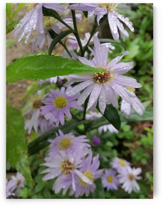 Flower in a rainy day  by Karen