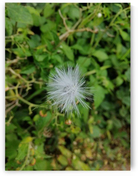 Make a wish  by Karen