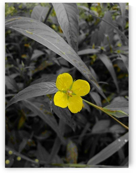Yellow  by Karen