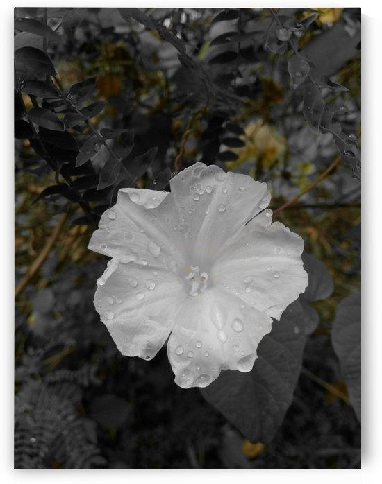 White after rain by Karen