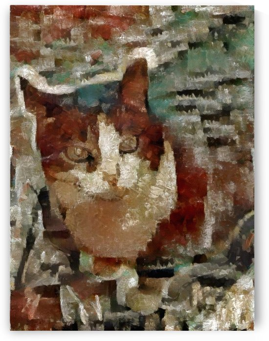 Cat by Bruce Rolff