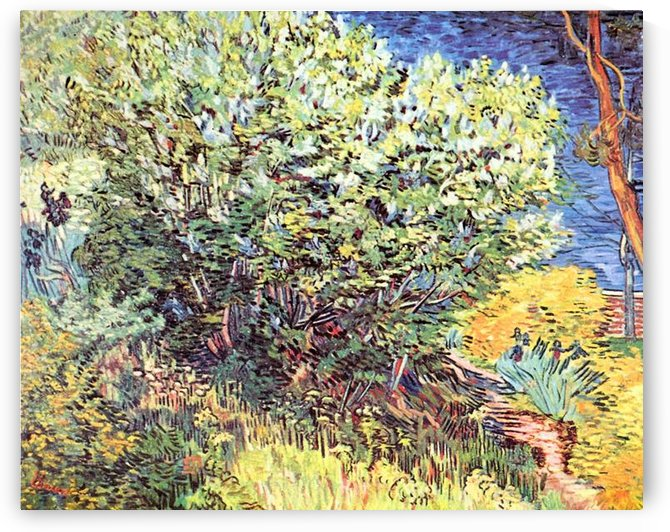 The bush by Van Gogh by Van Gogh