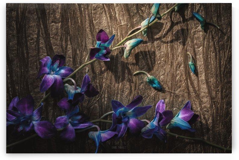 Oiseaux bleus by Daniel Thibault artiste-photographe