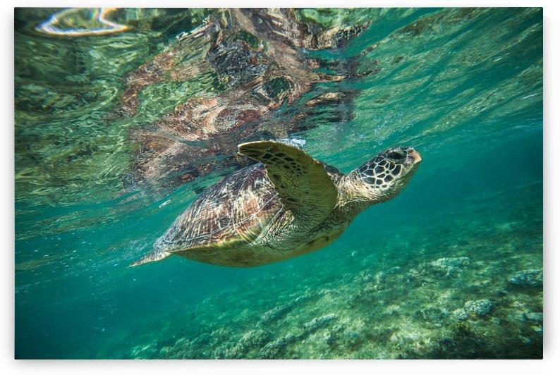 Turtle by Roman Buchhofer