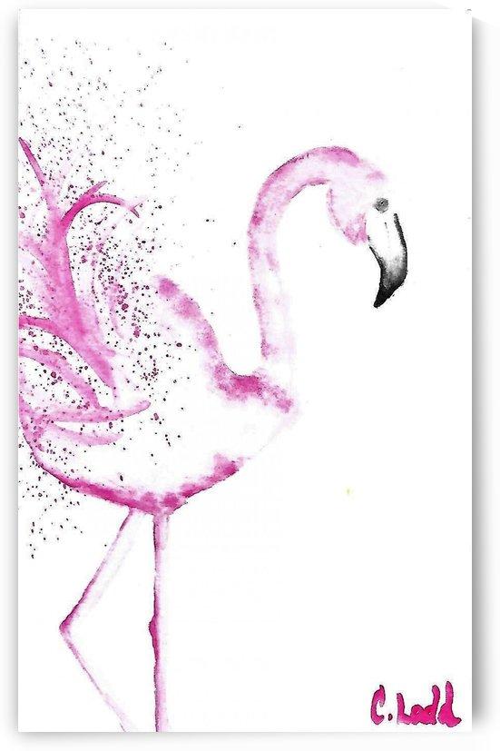 flamingo  by Corinne Ladd