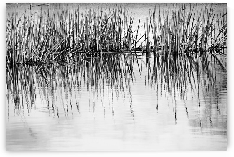 Cattail Abstract II Black And White by Deb Oppermann