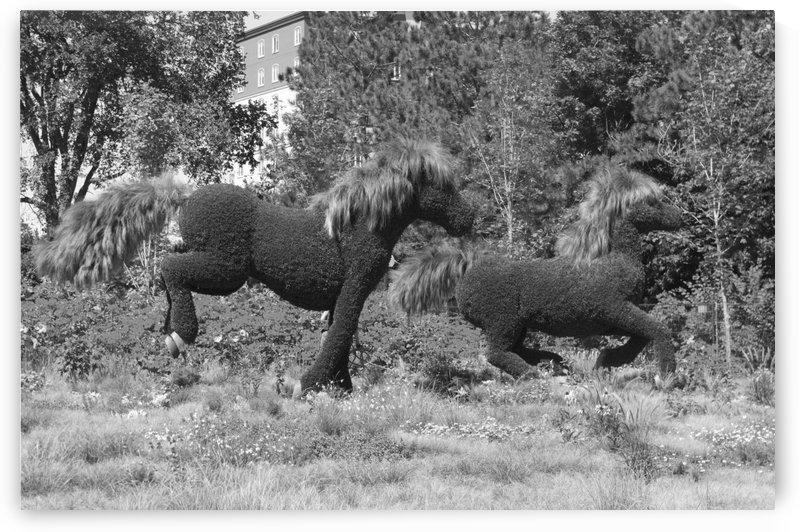 MosaïCanada 150 Display of horses b&w by Bob Corson