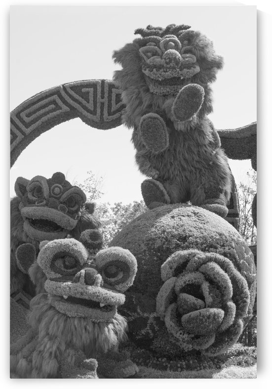 From Shanghai: Joyful Celebration of the Nine Lions b&w by Bob Corson