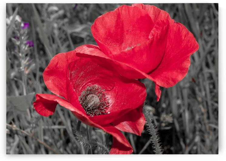 Red  by Terry Walsh Images