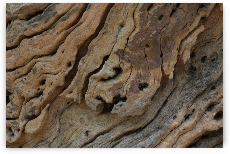 Close-up view rough texture of dead wood by Krit of Studio OMG