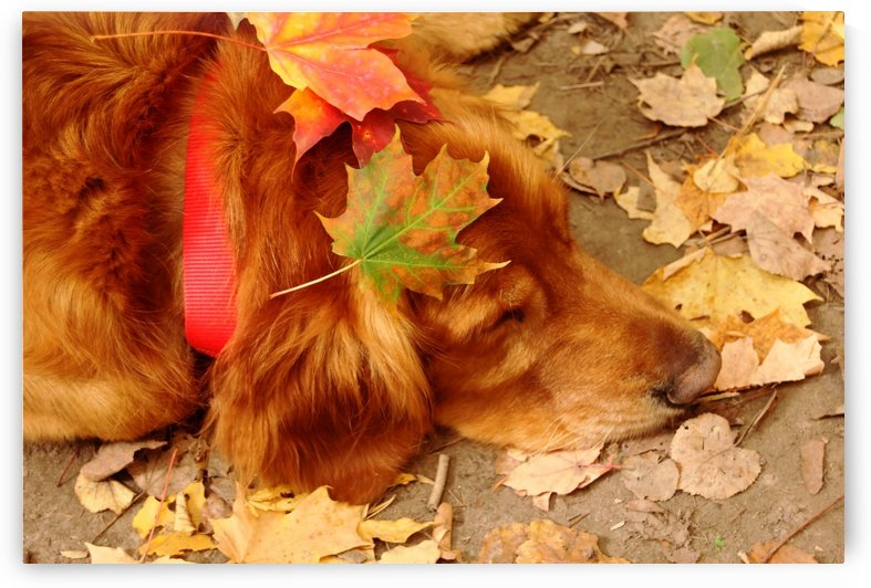 Autumn Snooze by Deb Oppermann