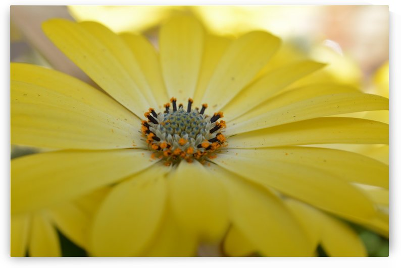 Yellow Flower Photograph by Katherine Lindsey Photography