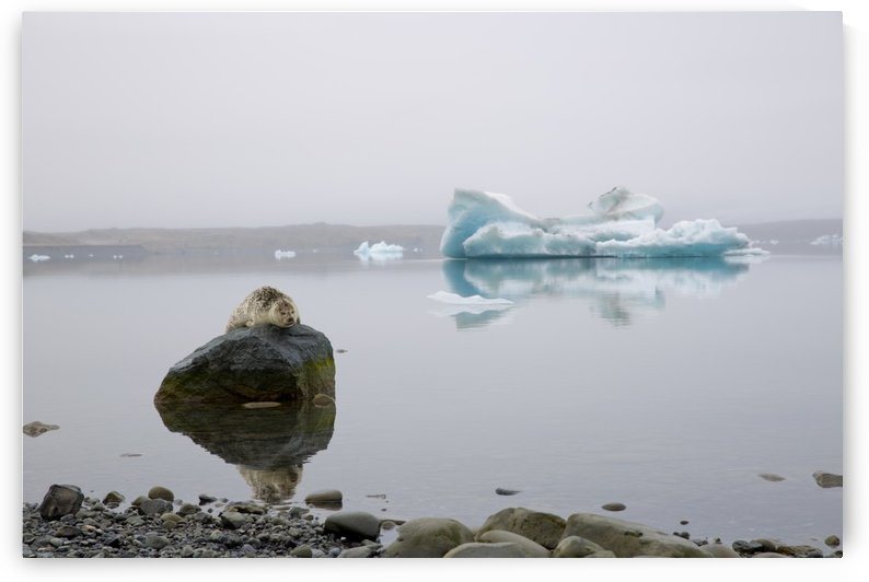 A Glacial Nap by Lindsey McCarty