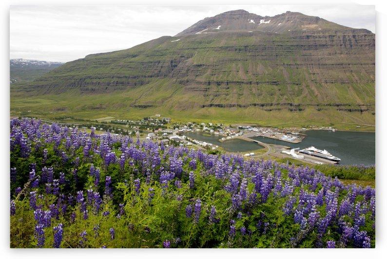 Flowers over Seyðisfjörður by Lindsey McCarty