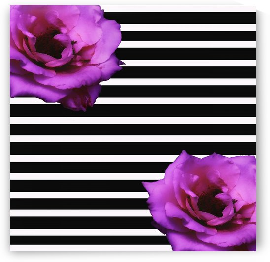 Black Stripes with Roses by rizu_designs
