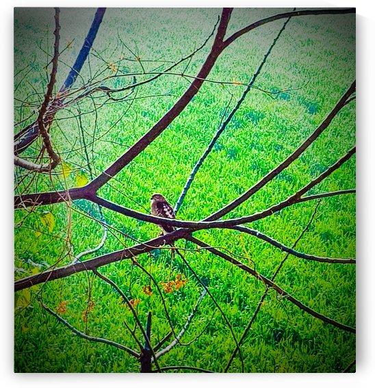lone bird series 1 by MTT