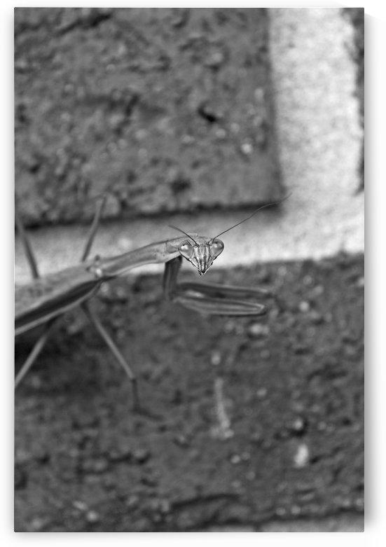 Bug Eyes B&W by Gods Eye Candy