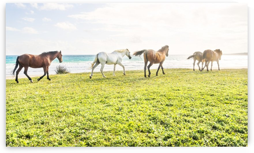 BEACH HORSES 3. by ANDREW LEVER GALLERY
