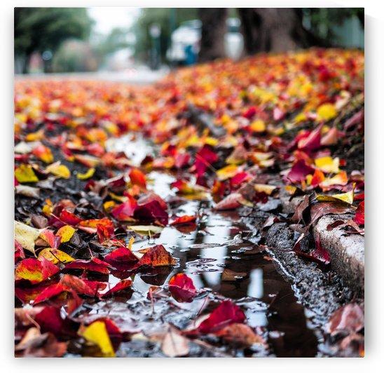 The Colors of Fall by Daniel McCartt