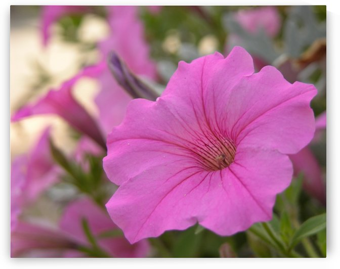 Pink Flowers Photography by Katherine Lindsey Photography