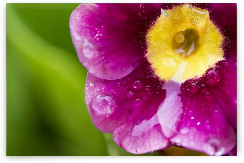 Flower by Deana McNeish