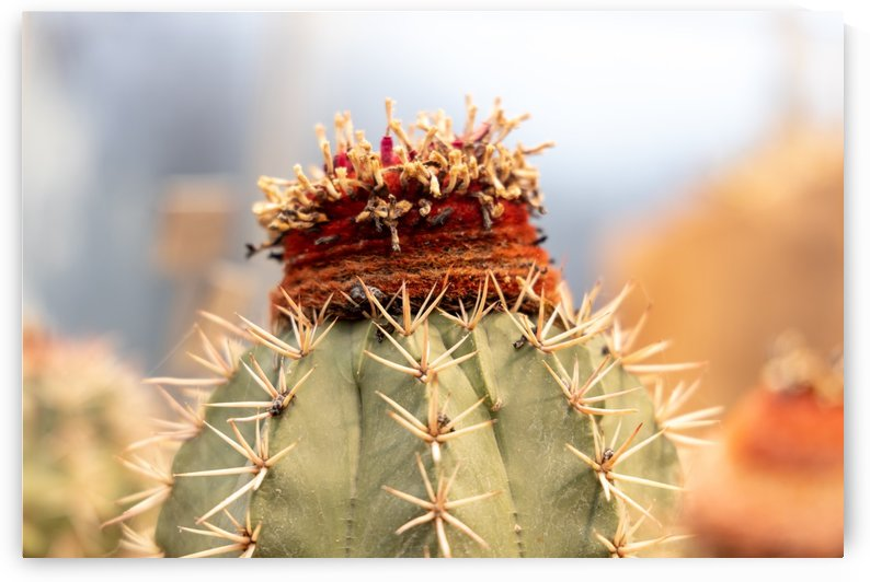 Unusual cactus by Per-Anders Gunnarsson