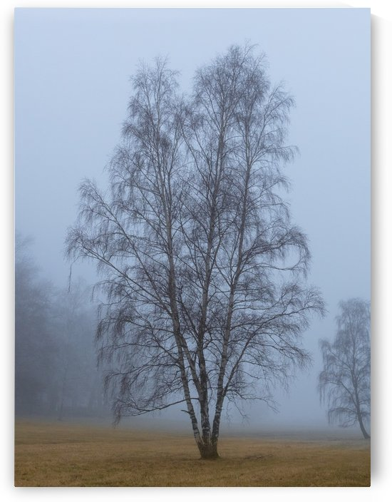 One tree in fog by Per-Anders Gunnarsson