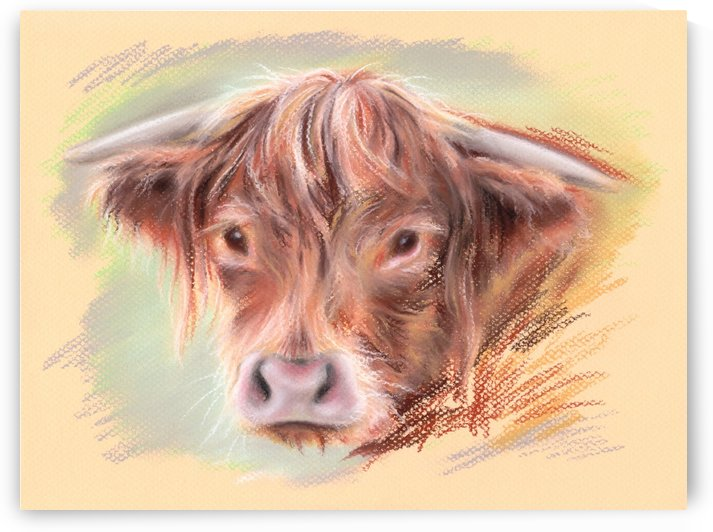 Highland Cow by MM Anderson