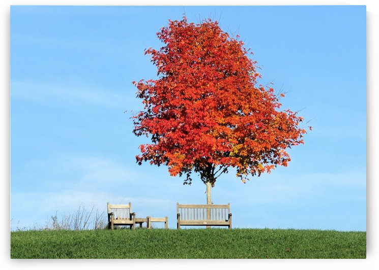 Under the foliage tree by Photography by Janice Drew