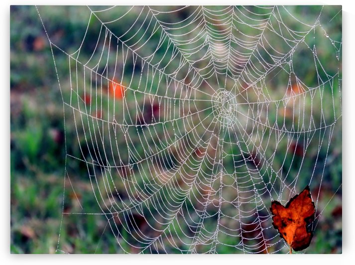 Spider web by Photography by Janice Drew