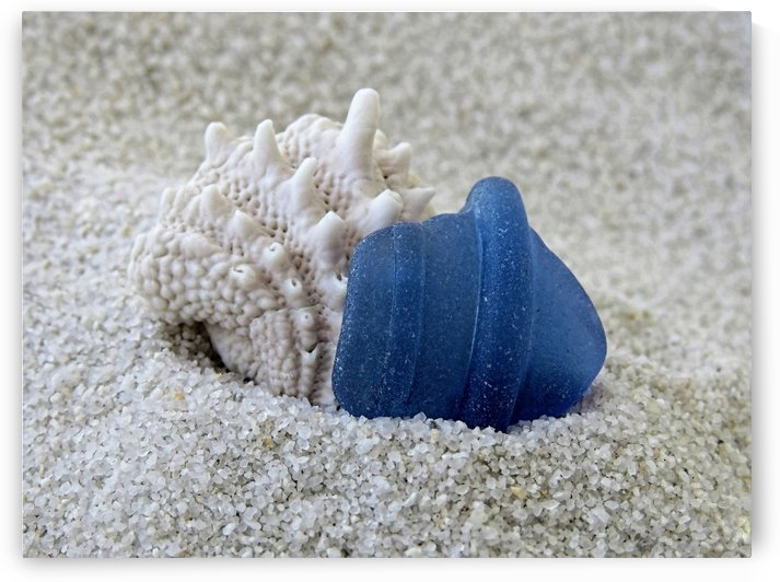 Blue sea glass and seashell by Photography by Janice Drew