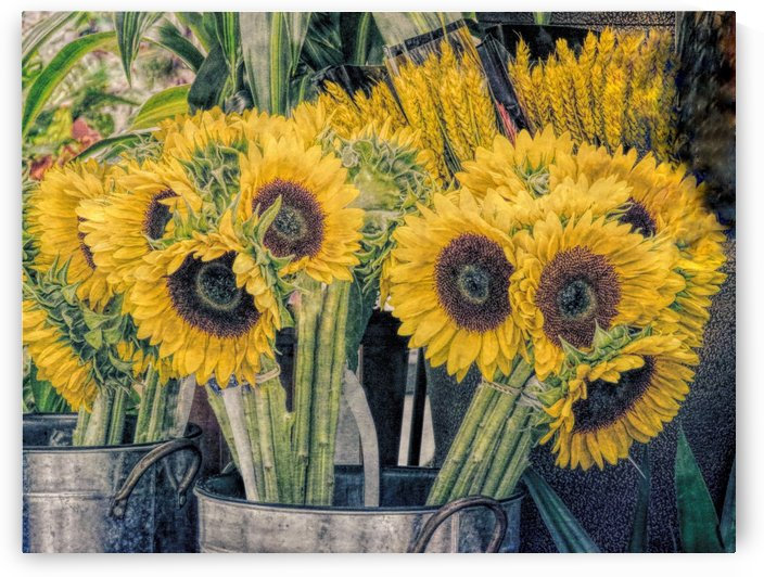 Sunflowers for sale by Photography by Janice Drew