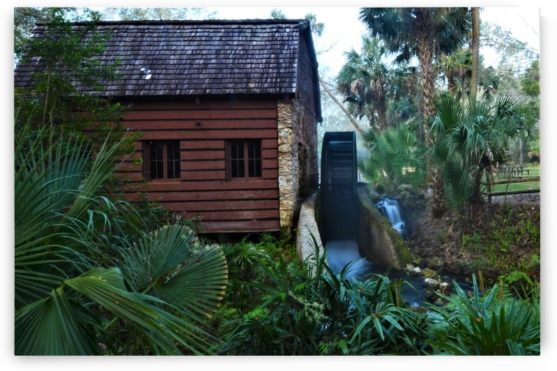 Florida Watermill by Frederick Missel