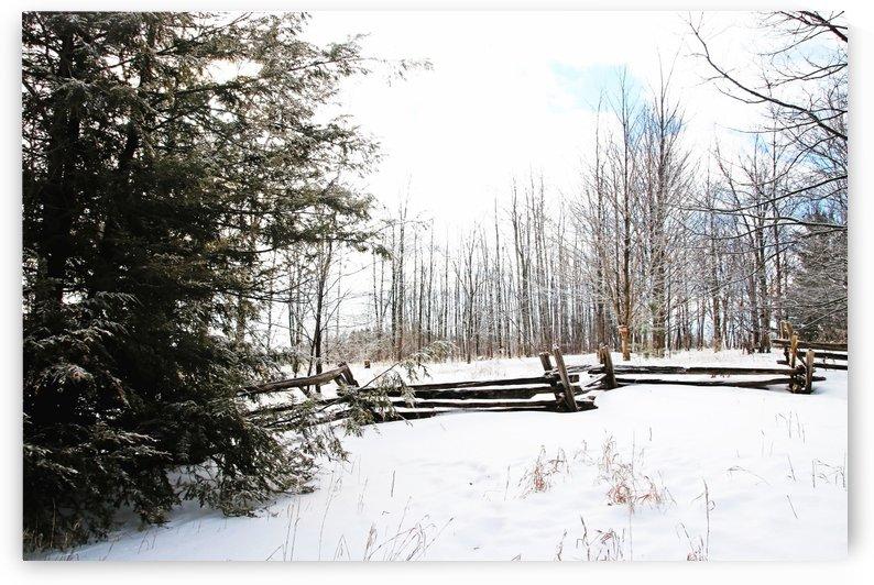 Frosty Winter Morning by Deb Oppermann