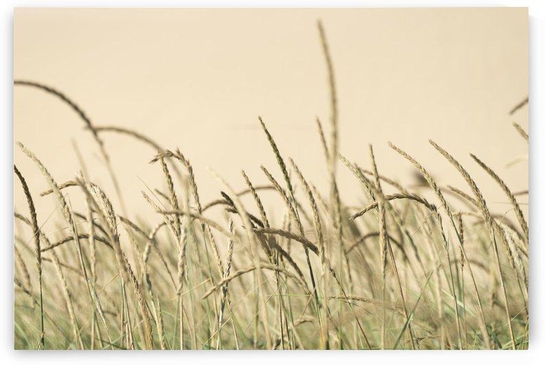 Grassland by Kirsten Warner