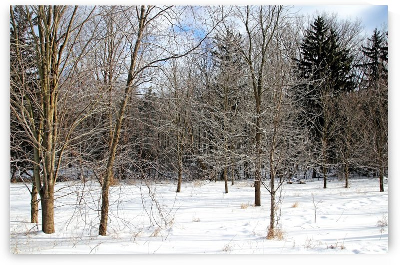 Frosty Branches by Deb Oppermann