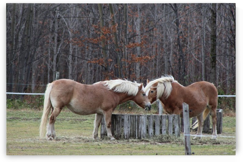 chevaux by Kathleen Héon