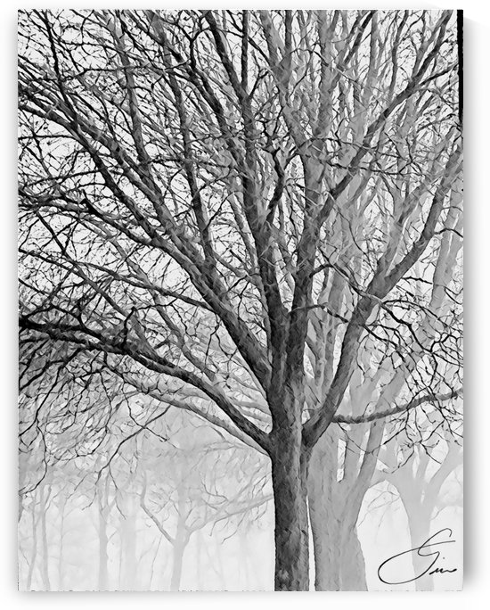 Trees in the Mist by lisa drew