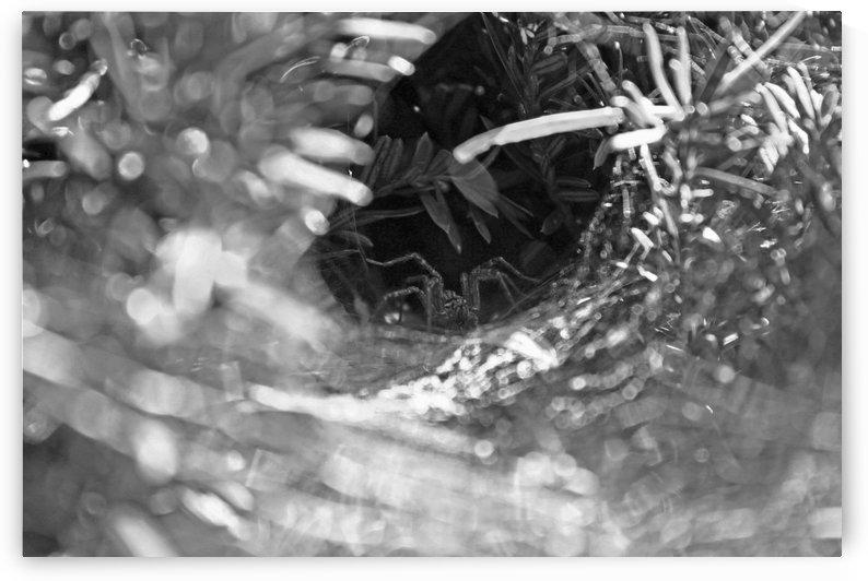 Tunnel of Web B&W by Gods Eye Candy
