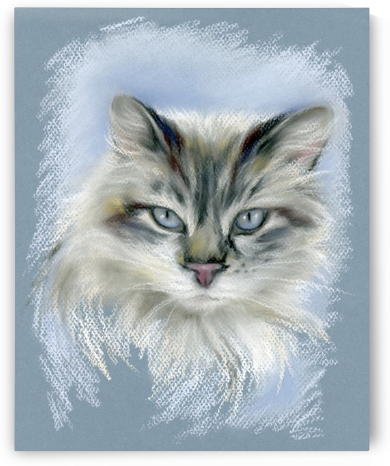 Long Haired Cat with Blue Eyes by MM Anderson