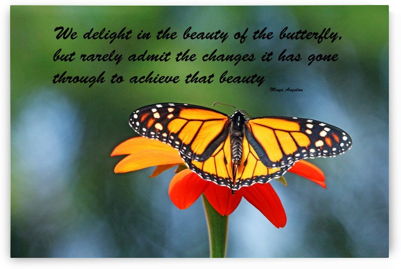 The Beauty Of The Butterfly I by Deb Oppermann