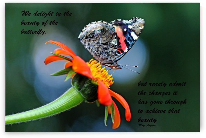 The Beauty Of The Butterfly II by Deb Oppermann