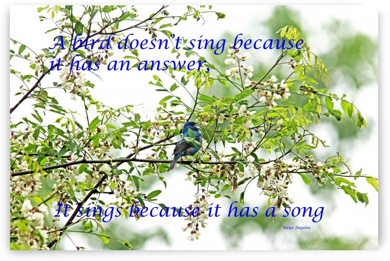 Because It Has A Song by Deb Oppermann