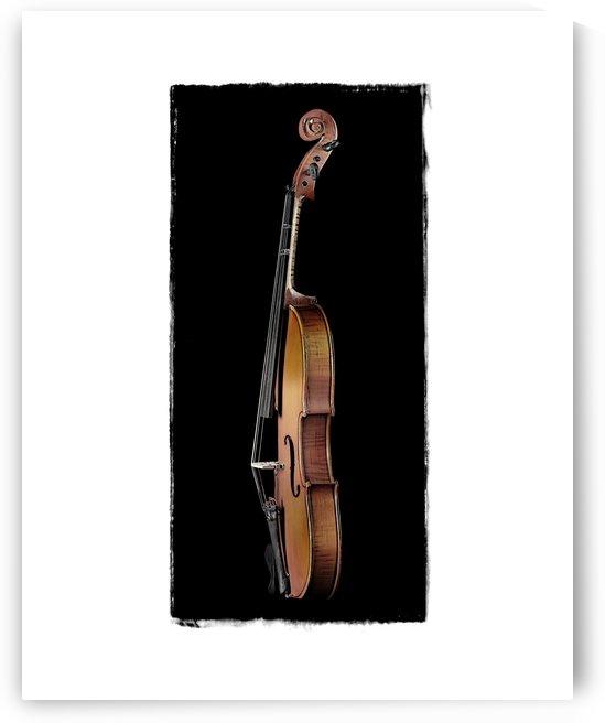 Violin Profile by Pat Chuprina