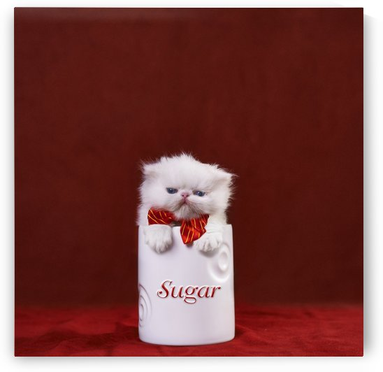 White kitten in sugar bowl by Alexandra Draghici