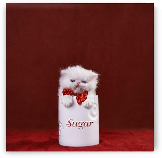White kitten in sugar bowl by Alexandra Draghici