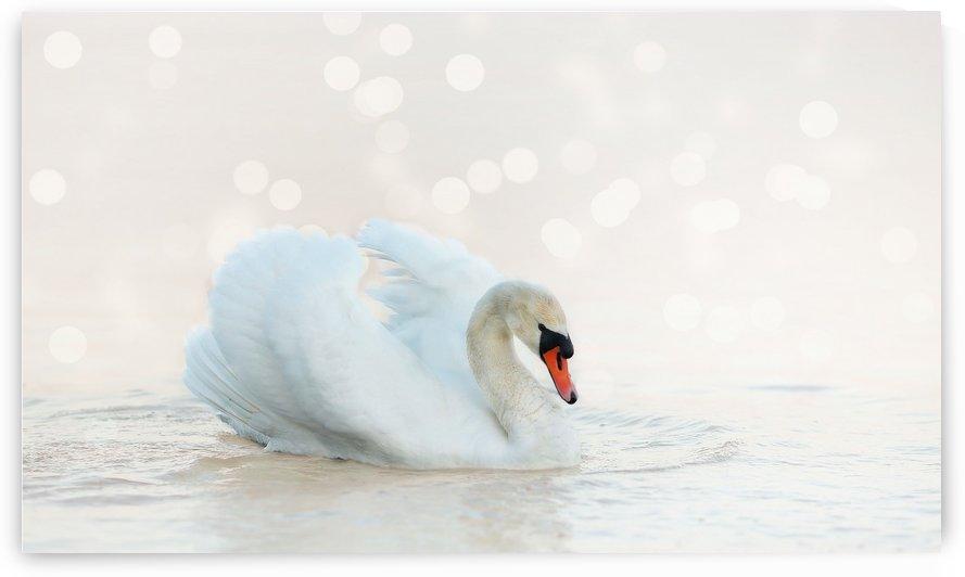 Swan by One Simple Gallery