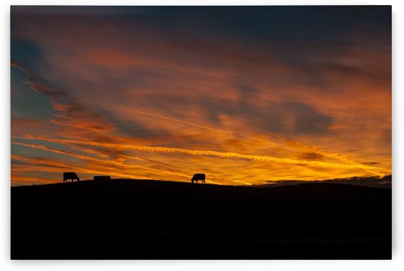 Grazing After Sunset by Garald Horst