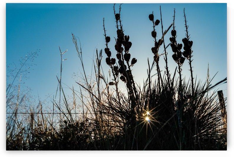 Double Specular Sunrise by Garald Horst